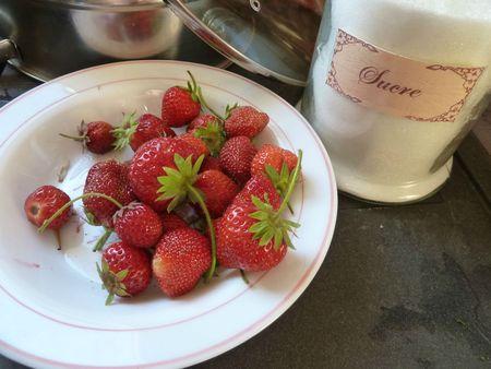 19-fraises -7 aout (1)