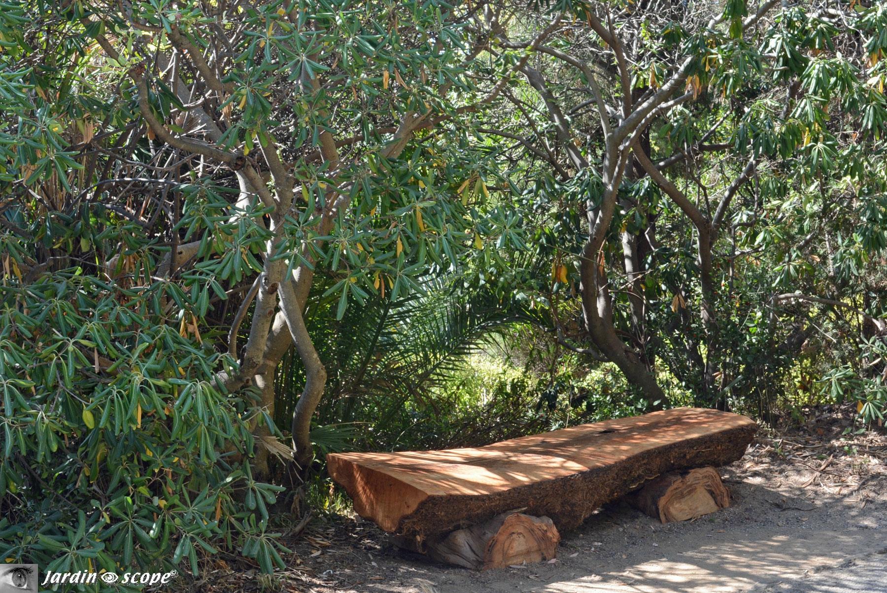 Banc tronc d'arbre au Domaine du Rayol dans le Var