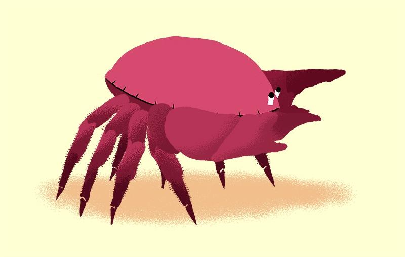 crabe_nikol