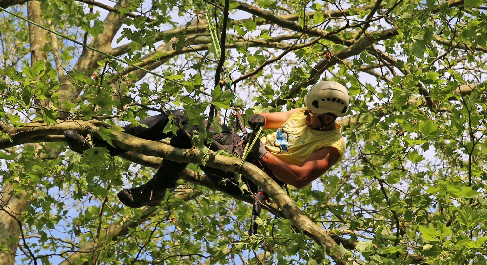 Rencontre nationale d'arboriculture 2016