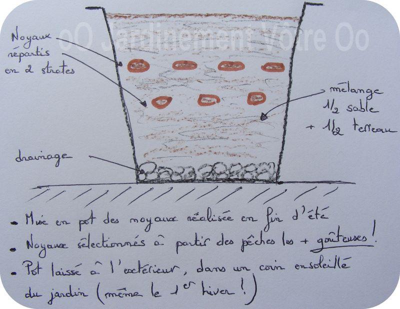 Les 7 p chers capitaux jardinement v tre - Planter noyau d abricot ...