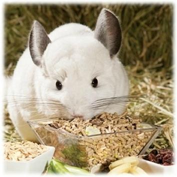 alimentdangereuxrongeur (3)
