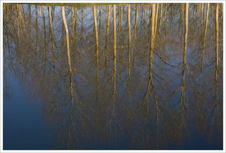 canal_reflet_peupliers_2_MP_121208
