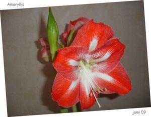 janv_09_blog_vert_fleur_A