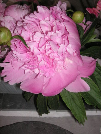 table_pivoines_018