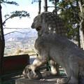 Lion du Pule Temple - Chengde
