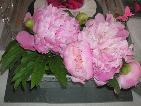 table_pivoines_043