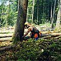 Exploitation après tempête en forêt