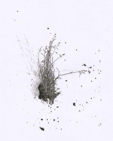 meadowgrass_deburca