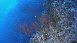 corail_noir