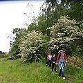 146 - Sentier de Saint-Ghislain - Terril de Marcasse