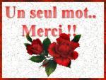 merc roses