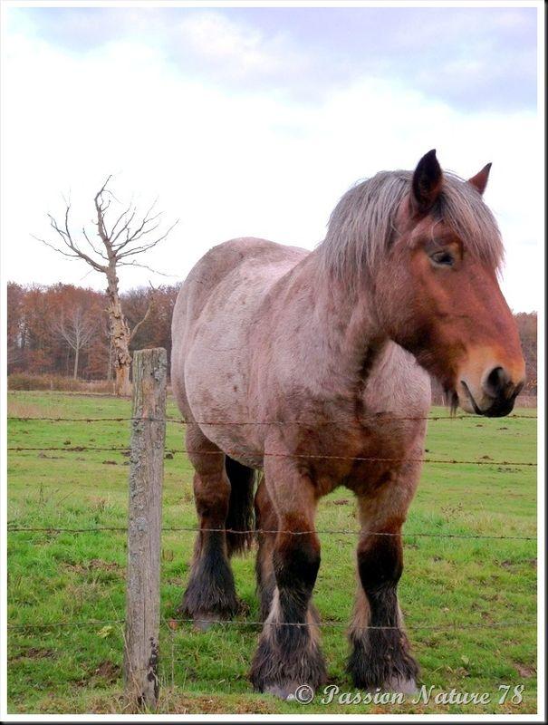Le 78 département du cheval (6)