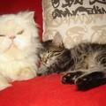 Asia et Cléo font la sieste