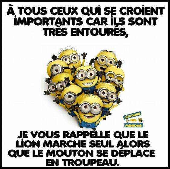 Citations Des Minions Blog Mooslargue 2016 Blog