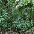 Rainforest scenery