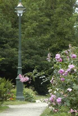 roseraie_lampadaire_beaumont_1_