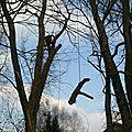 830J0105 a Démontage frêne à Darney