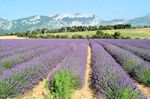 provence_262748