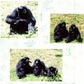 gibbons 3