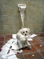 chien-fou-dechire-du-papier-toilette