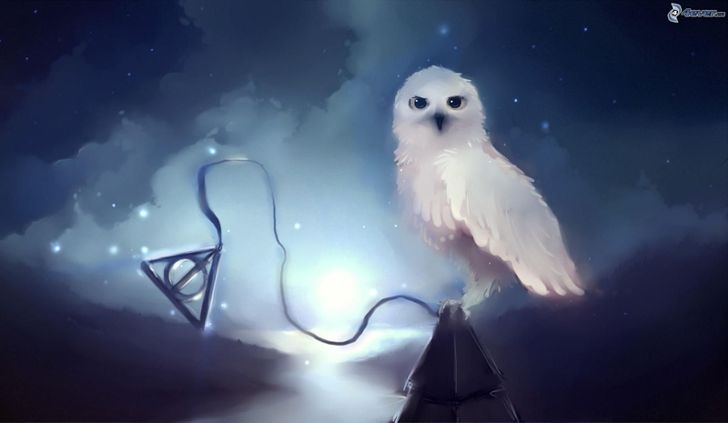 hibou-blanc,-etoiles,-nuit-176483