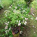 10- encore des fleurs