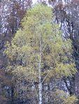 arbres_21