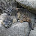 05 Les Marmottes (66)