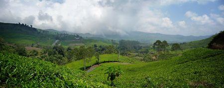 09_tea_plantations_2