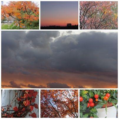 orange_automne