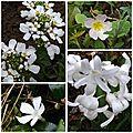 Jardin avril (4)