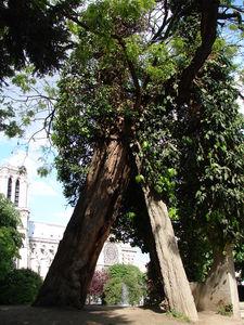 Paris_2009_004