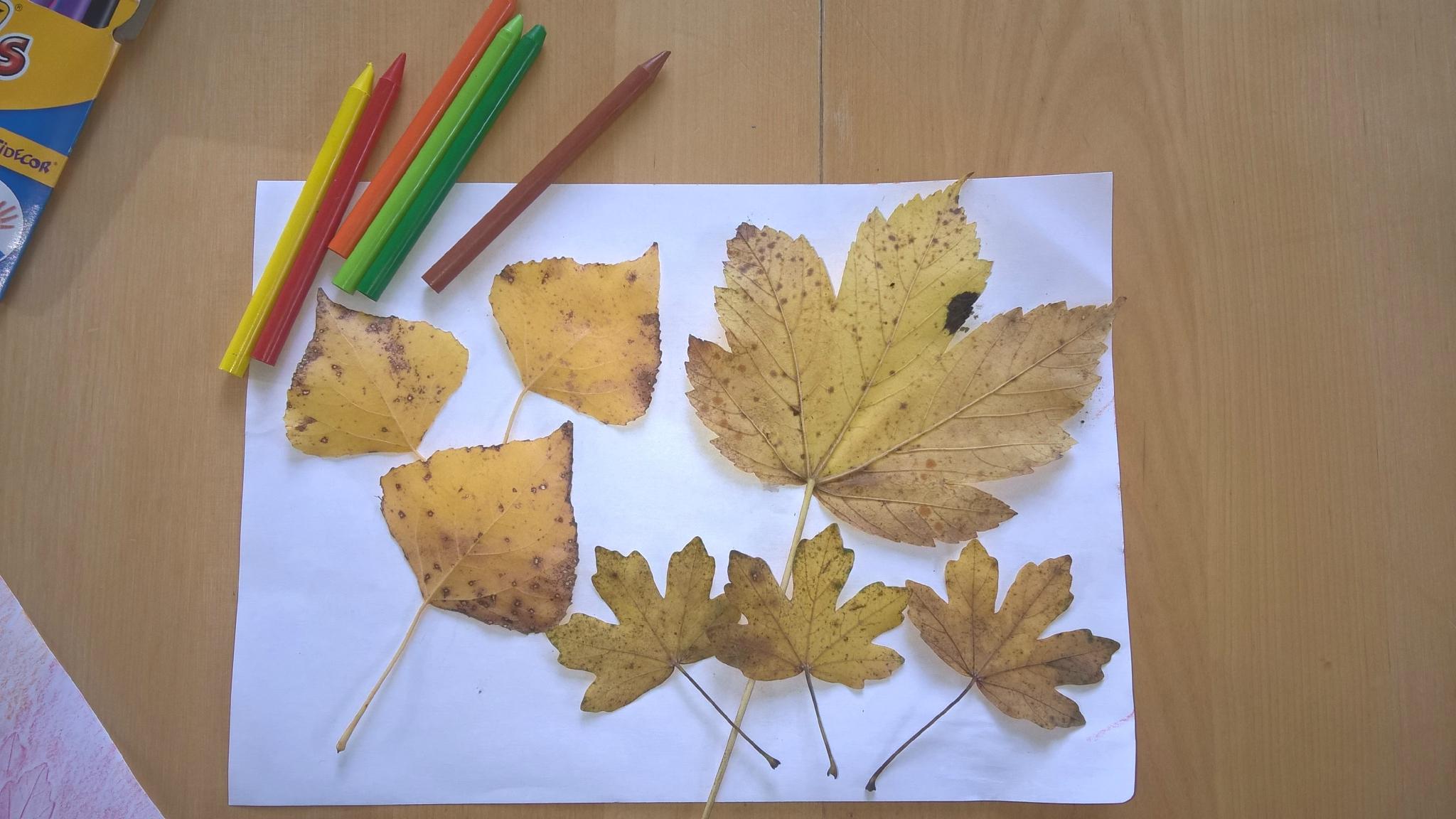 Des feuilles mortes en pastels