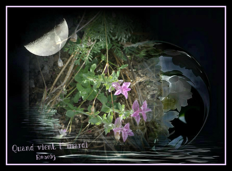 Quand vient l'mardiRose63( dans un décor de chez Pixiz ma photo des fleurs