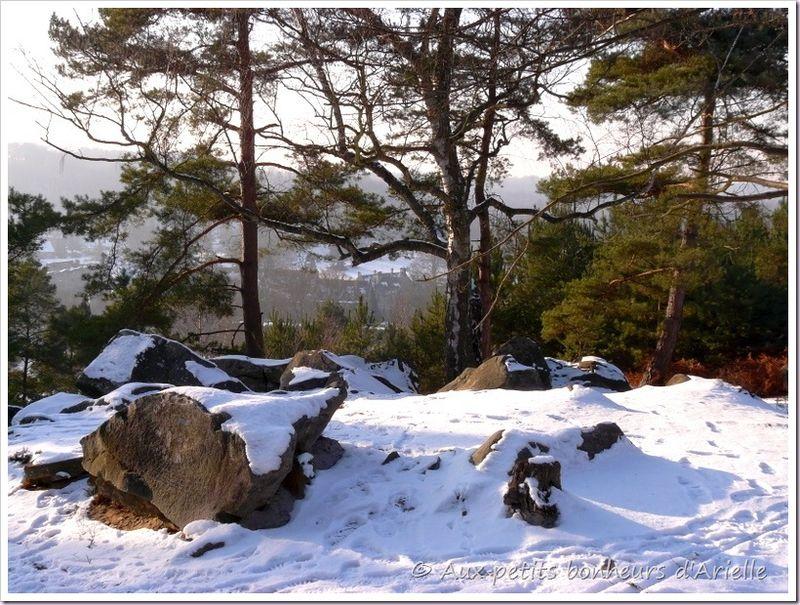 Ma forêt sous la neige (12)
