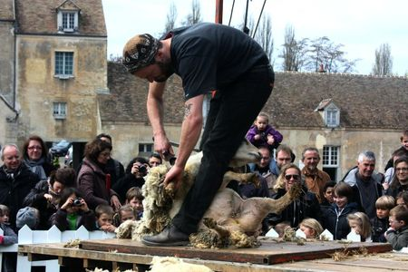 08 avril 2012 ferme de Gally (36)