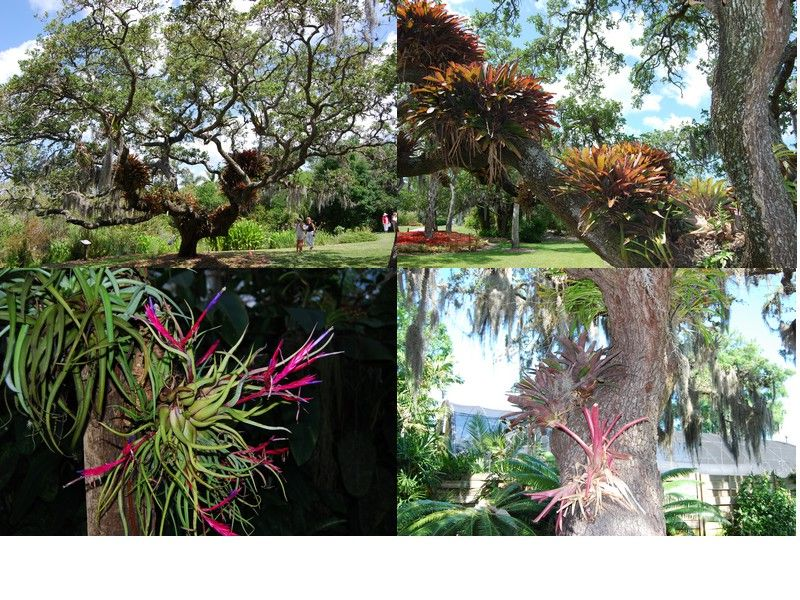 mary selby epiphytes
