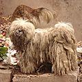 rasta dog, le chien le plus crados que j'ai jamais vu !