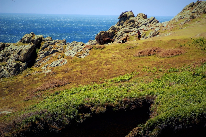 OUESSANT__116_