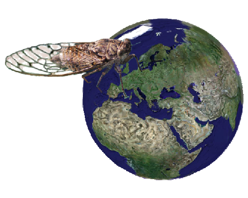 cigale monde