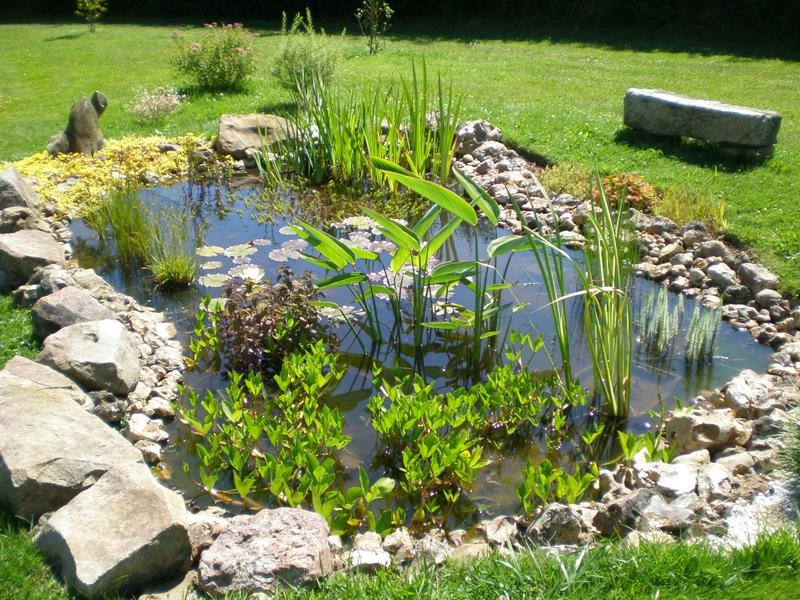 Un petit tour au bassin boutures de reves le jardin de for Marre de jardin