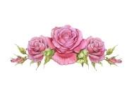 vignette-of-roses
