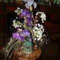 Iris freezia ail