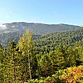 Un jour en forêts d'Aspe Barétous, le 29 août 2011...