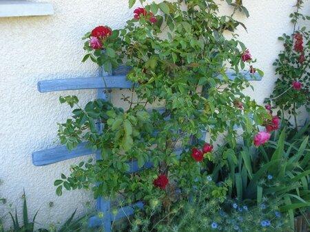 dét obj plantes (15)