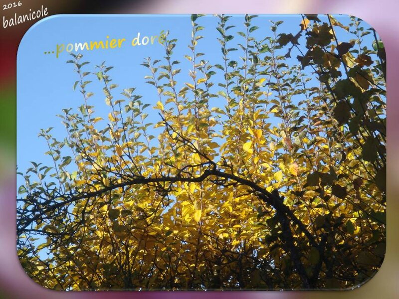balanicole_2016_10_d'halloween à l'automne la suite_40_pommier feuilles3