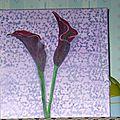 arums violets