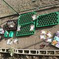 2009 03 13 Mes premiers semis de tomates, vivaces et annuelles par cette journée printanière