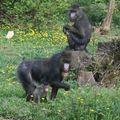 la vallée des singes 0981